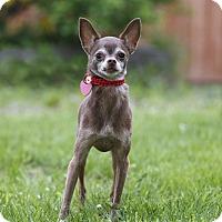 Adopt A Pet :: Tougas - Ile-Perrot, QC