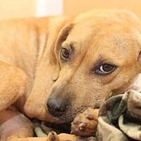 Adopt A Pet :: Vicki - Rossville, TN
