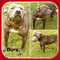 Adopt A Pet :: DORA - Malvern, AR