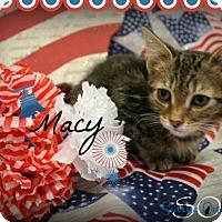 Adopt A Pet :: Macy - Chandler, AZ