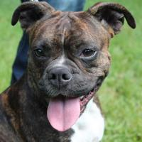 Adopt A Pet :: Roxy - Friendship, WI