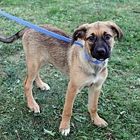 Adopt A Pet :: Leela - Joliet, IL