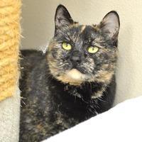Adopt A Pet :: Zoe - Redmond, OR