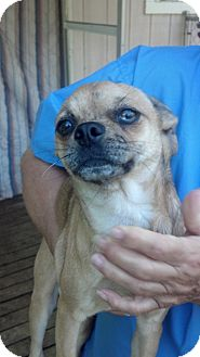 Pug Mix Puppy for adoption in Crump, Tennessee - Cassandra