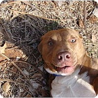 Adopt A Pet :: Buster - Blanchard, OK