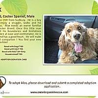 Adopt A Pet :: Max - Ottawa, ON