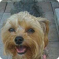 Adopt A Pet :: Abby - Tallahassee, FL