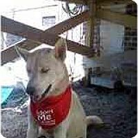 Adopt A Pet :: Buddy - Jacksonville, NC