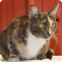 Calico Cat for adoption in Savannah, Missouri - Sally