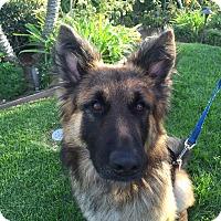 Adopt A Pet :: Austin..Beauty and Brains :-) - Redondo Beach, CA