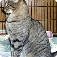 Adopt A Pet :: BigUn - Dallas, TX