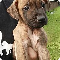 Adopt A Pet :: Bin - Gainesville, FL