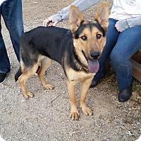 Adopt A Pet :: Ember - Fort Worth, TX