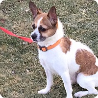 Adopt A Pet :: Louie - Schaumburg, IL