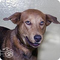 Adopt A Pet :: Coco - Divide, CO