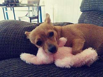 Chihuahua/Dachshund Mix Dog for adoption in Los Banos, California - Jaina