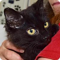 Adopt A Pet :: Pi - Nashville, IN