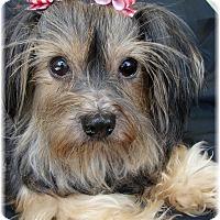 Adopt A Pet :: Tulah - Palm City, FL
