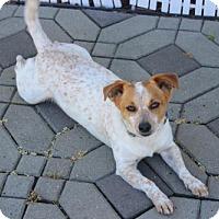 Adopt A Pet :: Merlin - Morgan Hill, CA