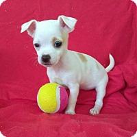 Adopt A Pet :: Ozzy - Lawrenceville, GA