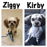 Adopt A Pet :: Kirby/Ziggy - Fairview Heights, IL