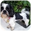 Photo 3 - Shih Tzu Dog for adoption in Los Angeles, California - PHINEAS