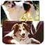 Photo 2 - Border Collie Mix Dog for adoption in Stephentown, New York - Quinn