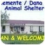Photo 2 - Domestic Shorthair Cat for adoption in San Clemente, California - IRIS