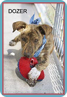 Terrier (Unknown Type, Medium) Mix Puppy for adoption in Corpus Christi, Texas - Dozer