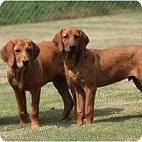 Adopt A Pet :: Elvis - Fort Hunter, NY