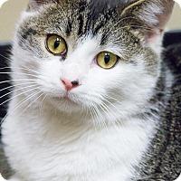 Adopt A Pet :: Duncan - Chicago, IL