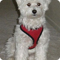 Adopt A Pet :: HENRY - Mission Viejo, CA