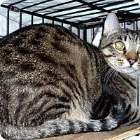 Adopt A Pet :: Barney - Dallas, TX