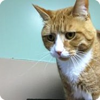 Adopt A Pet :: Julious - Quilcene, WA