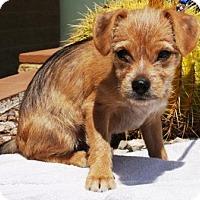Adopt A Pet :: Bubbles - Gilbert, AZ