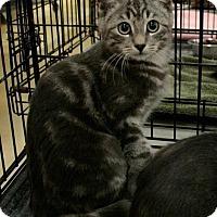 Adopt A Pet :: Donny - Sacramento, CA