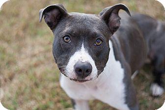 Terrier (Unknown Type, Medium) Mix Dog for adoption in Marietta, Georgia - Layla