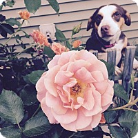Adopt A Pet :: Reese - Franklinville, NJ