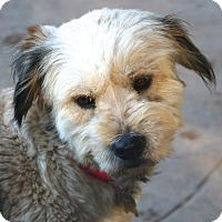 Adopt A Pet :: Holly Berry - Norwalk, CT