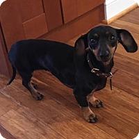 Adopt A Pet :: Lucy - Atlanta, GA