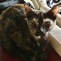 Adopt A Pet :: Vicky - Boca Raton, FL
