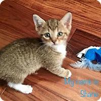 Adopt A Pet :: Shane (KJ) 322.17 - Orlando, FL