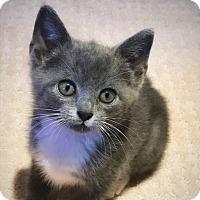 Adopt A Pet :: Sabrina - Knoxville, TN