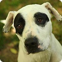 Adopt A Pet :: Jax - Lafayette, IN