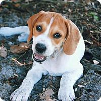 Adopt A Pet :: Ninny - Groveland, FL