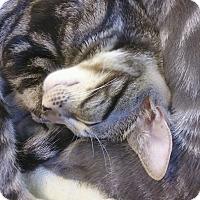 Adopt A Pet :: Bobbie - West Palm Beach, FL