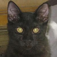 Adopt A Pet :: Smokey Bear - Mobile, AL