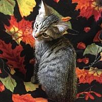 Adopt A Pet :: Daria - Harrisville, WV