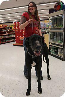 Great Dane Dog for adoption in Grand Rapids, Michigan - Sampson