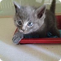 Adopt A Pet :: nonameyet - Orillia, ON